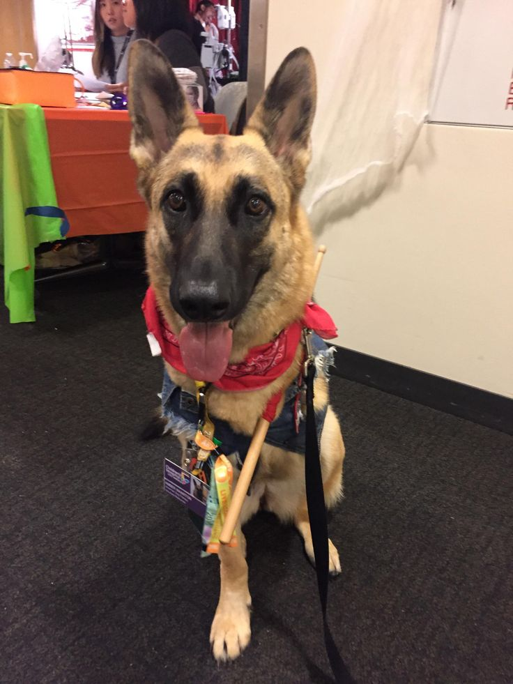 My tripawd dressed up at Rick Allen the drummer of Def Leppard  http://ift.tt/2lqo5UB