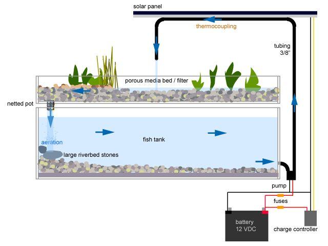 aquaponics  | Hydroponics, Aquaponics and Aeroponics | The Young Agropreneur