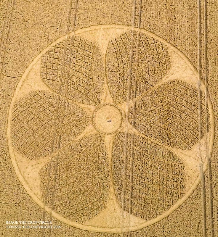 Crop Circle at Westbury White Horse, nr Bratton, Wiltshire. Reported 5th August 2016