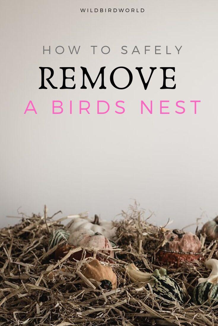 How To Safely Remove A Birds Nests Bird Nest Attract Wild Birds Birds