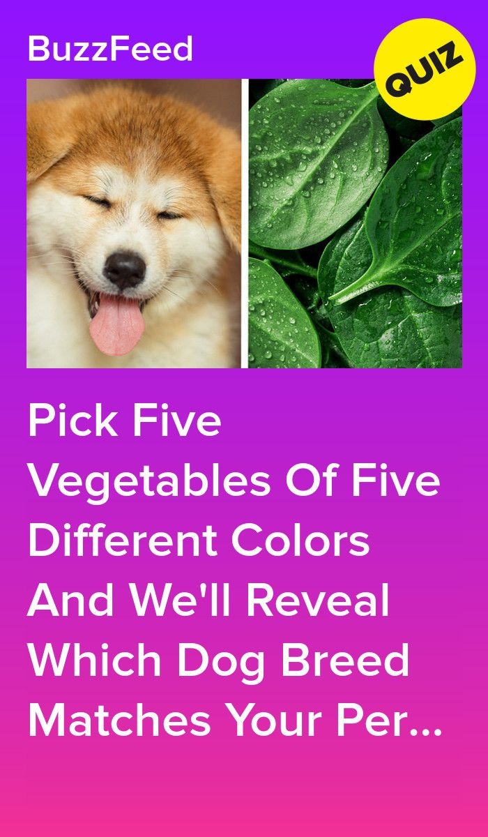 Pick Five Vegetables Of Five Different Colors And We Ll Reveal Which Dog Breed Matches Your Personality Dog Quizzes Dog Breed Quiz Animal Quiz
