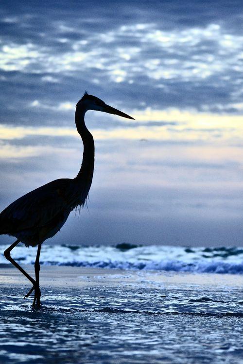 Pensacola Beach - Gulf Breeze, Florida (by...