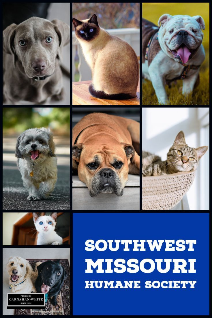The Humane Society of Southwest Missouri is an independent