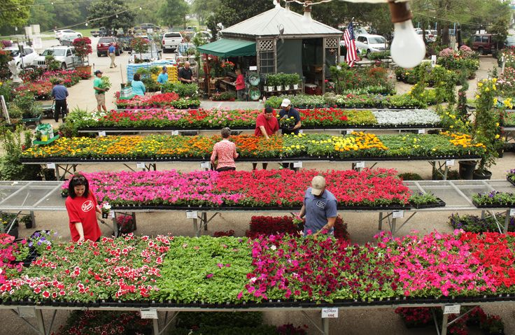 Milberger's has the largest selection of natural and fresh plants!   Milberger's Landscape & NurseryMilberger's Landscape & Nursery   San Antonio's Best Plant Nursery