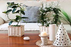 die 25 besten ideen zu jasmin pflanze auf pinterest. Black Bedroom Furniture Sets. Home Design Ideas