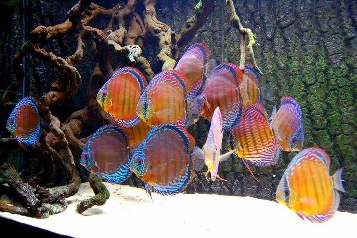 www.discusfishing.com