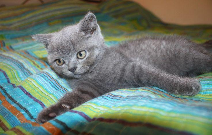 домашний кот