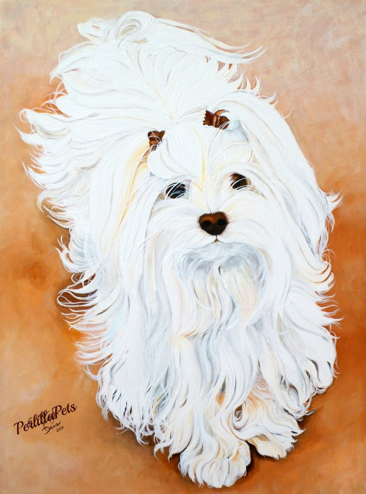 65 best Havanese images on Pinterest Dog art Animals and Coffee