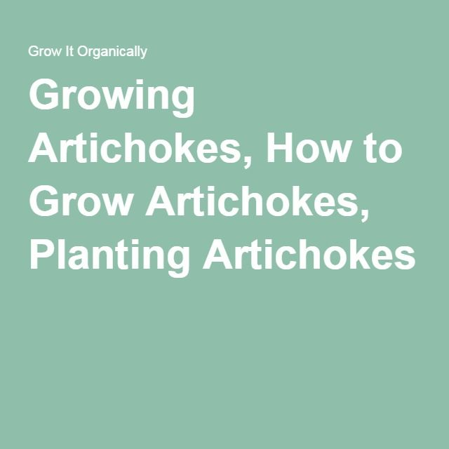 how to grow jerusalem artichokes from seed
