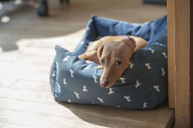 Easy diy dog bed: how to build a dog bed out of wood? with this cheap n easy dog bed diy, you can make your dog feel comfy and...