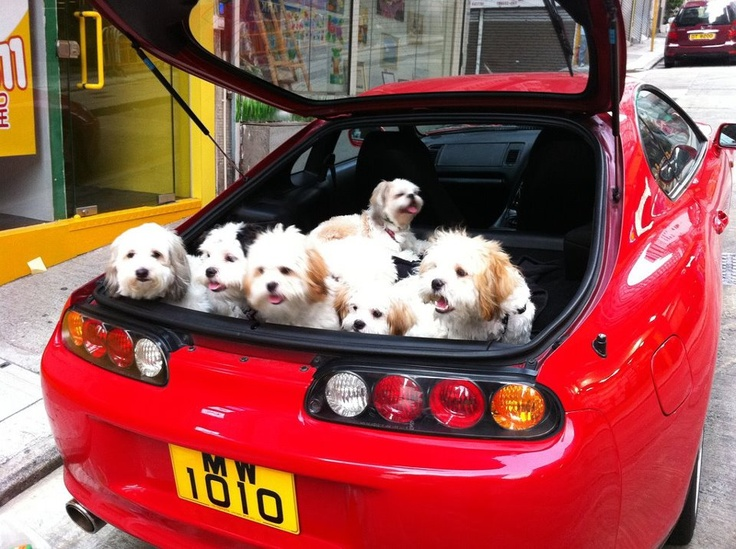 Toyota Supra with Puppies! Dogs, puppies, Dogs
