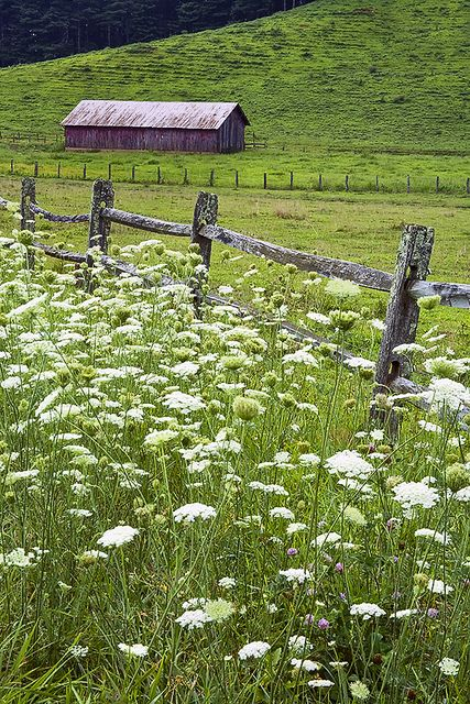 Red Barn and Queen Anne's Lace #2 by Rob Travis on flickr