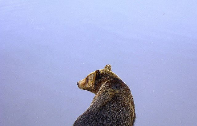Главы   Русский медведь из медвежьего края