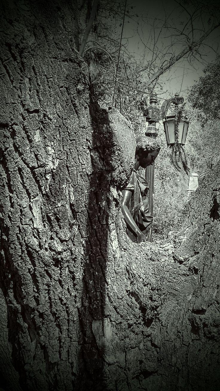 El alma de un árbol