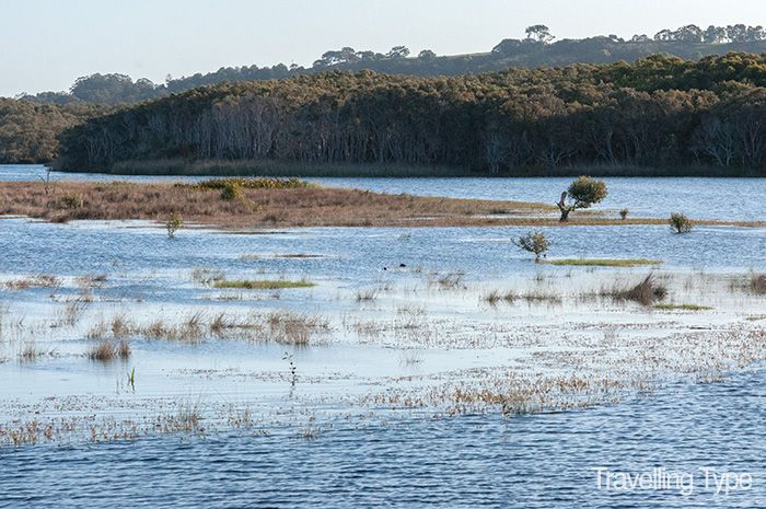 Exploring the Arakwal wetlands in Byron Bay