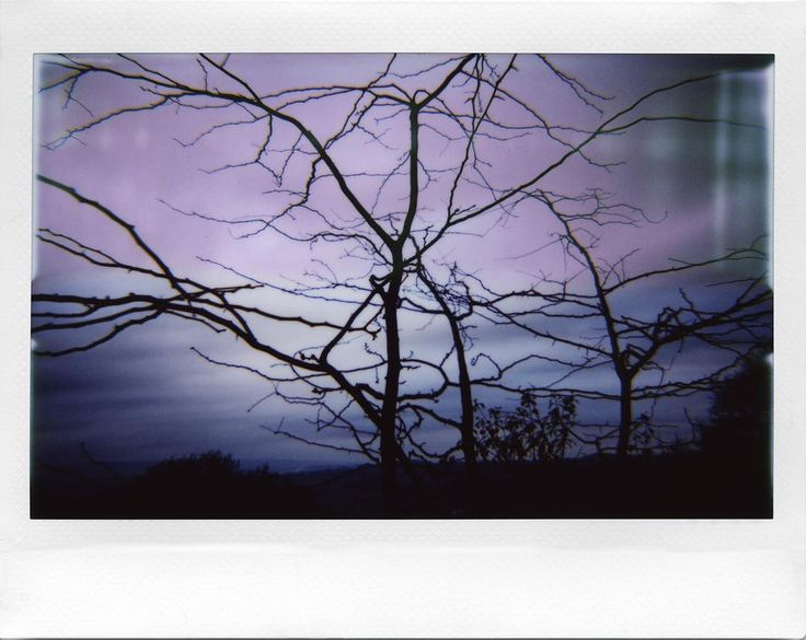 Skeleton trees #instaxwide #Fall #Autumn #analog #instant #analoguephotography #lomoinstantwide #repostmyinstax #MyInstax #black #backlit #Tuscany #autumntrees  Camera: Lomo'Instant Wide Film: Fuji Instax Wide Instax galore from my LomoHome album athttp://bit.ly/INSTAX-ADG  @instaxitalia @fujifilm_instax_northamerica @lomography