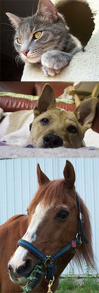 Contribute To Animal Rescue at The Animal Rescue Site, $1.00 - no limit!