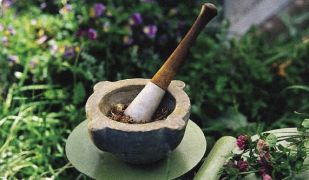 Domáca Medicína - Liečivé rastliny, na ktoré sa zabúda