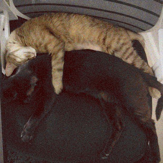 #metoxicat #metoxil #cat #dreams #hug