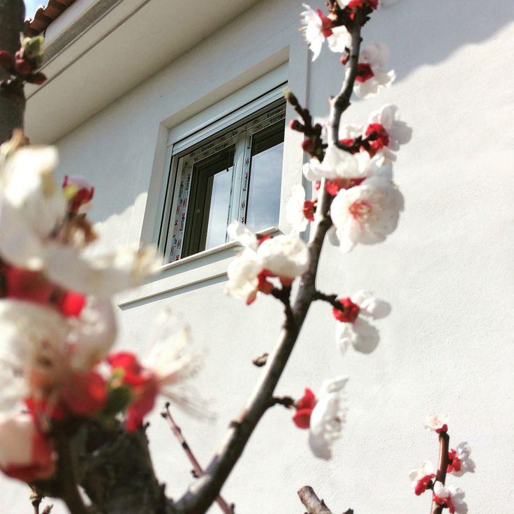 #mparolas #aluminium #window #europaprofil #spring #blossom #almondtree #eretria #evia http://alouminia-koufomata.gr