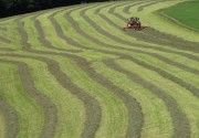 Agricoltura, la novità della nuova Politica Agricola Comune