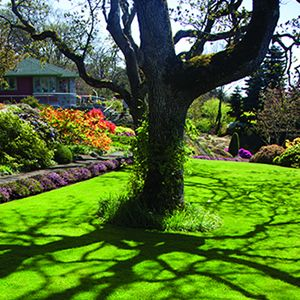 how to get a beautiful lawn