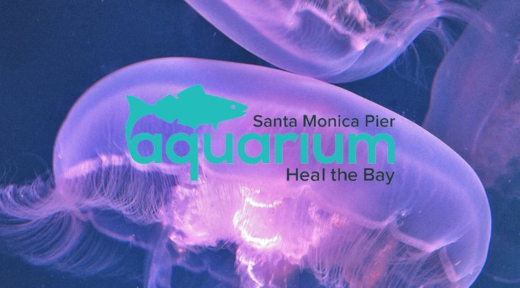 1000 Ideas About Santa Monica Pier Aquarium On Pinterest Santa Barbara Attractions Highway 1