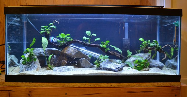 17 best images about fish tank design on pinterest for Stingray fish tank