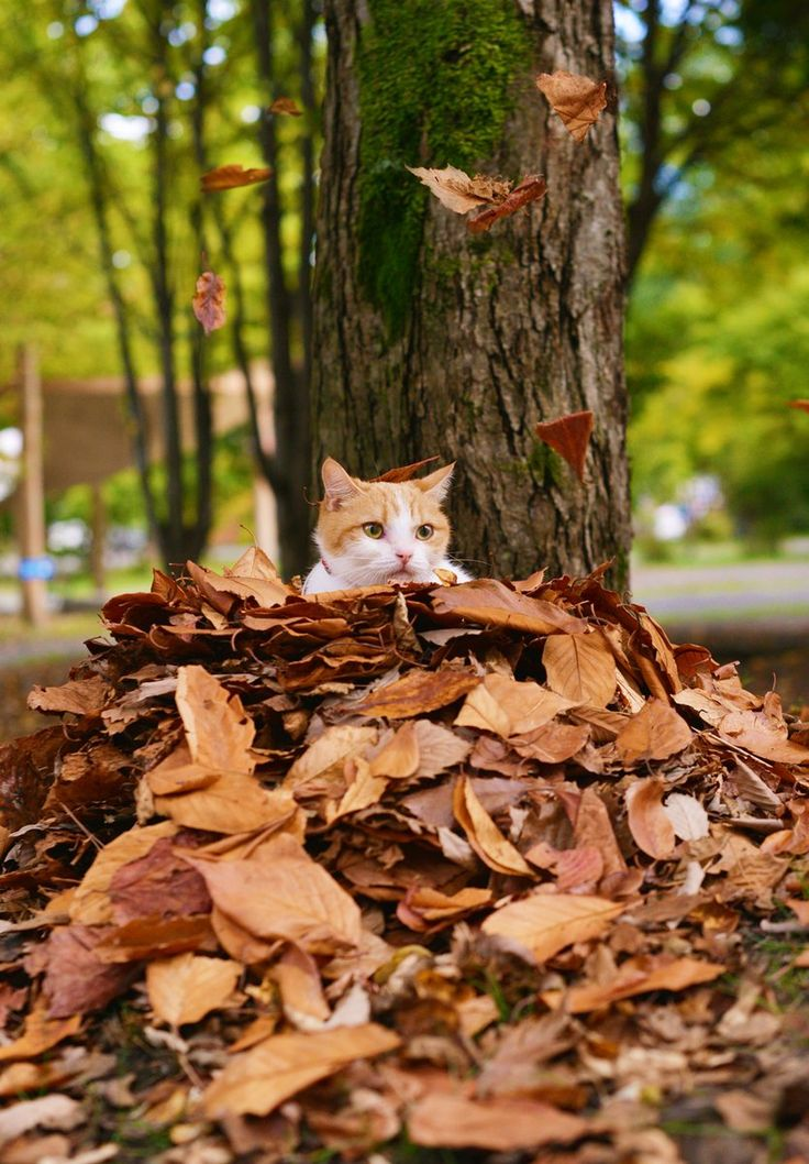 Cat in the fall