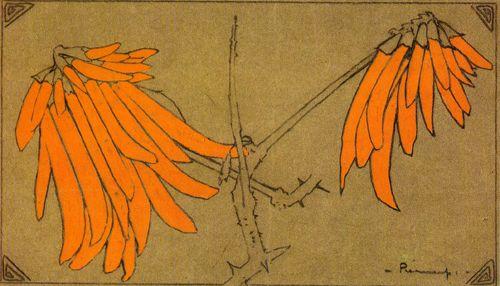 Erythrina flowers- Pierneef
