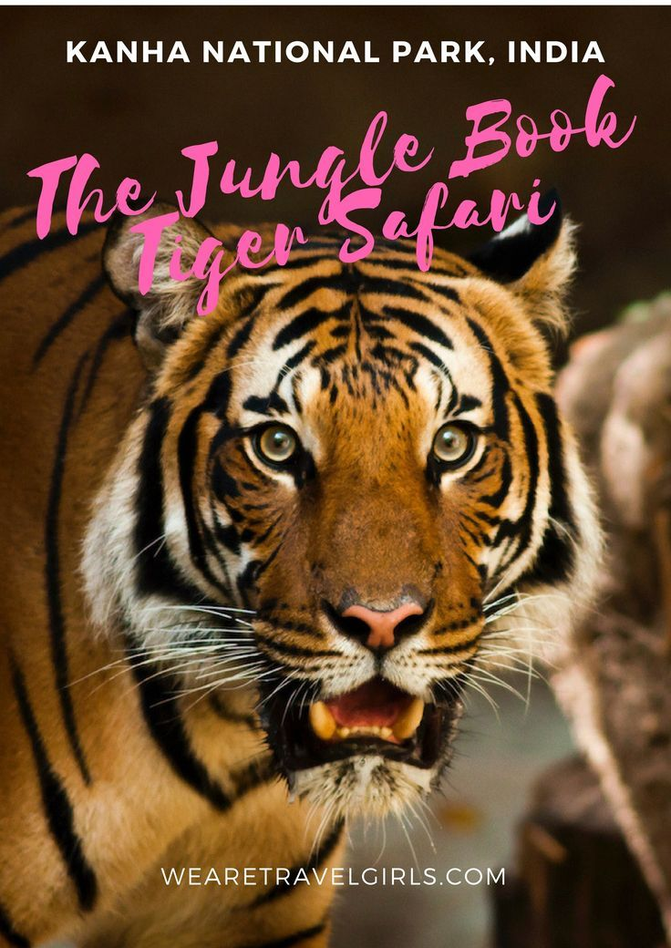 KANHA NATIONAL PARK, INDIA: THE JUNGLE BOOK TIGER SAFARI! When you hear safari you instantly think of the great plains of Africa. The endless savannah, flat-topped acacia trees, and blue lakes turned neon pink with flocks of flamingos. But did you know that you can also safari in India in the park that inspired The Jungle Book? Only instead of looking for lions, you'll be tracking tigers! By Anna Kloots for WeAreTravelGirls.com