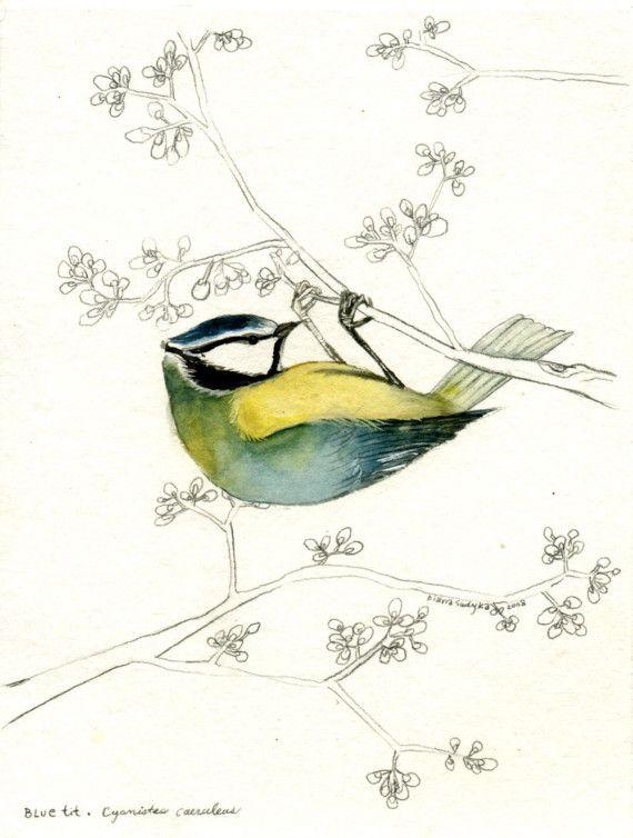 Original Watercolor  Cyanistes caeruleus by dsudyka on Etsy