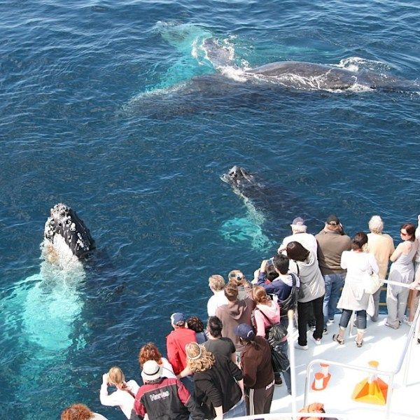 The premier Gold Coast Whale Watching Experience