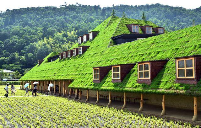 芝生の丘?いいえ屋根です 自然にとけ込む店 滋賀:朝日新聞デジタル