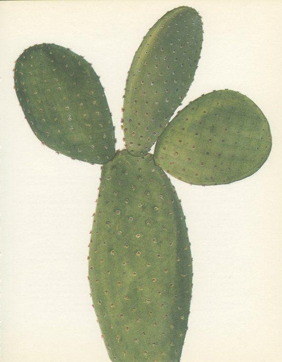 Bunny Ears Cactus, Vintage Print, 8 x 10, Botanical Cacti Plant (73) Opuntia microdasys, Natural History, Art, 1971, Kaplicka on Etsy, $15.01