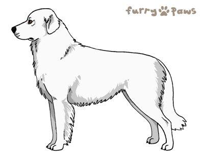 Furry Paws // WCH Kip's Lara Croft [3STM 16HH 1.138] *BoB*'s Kennel