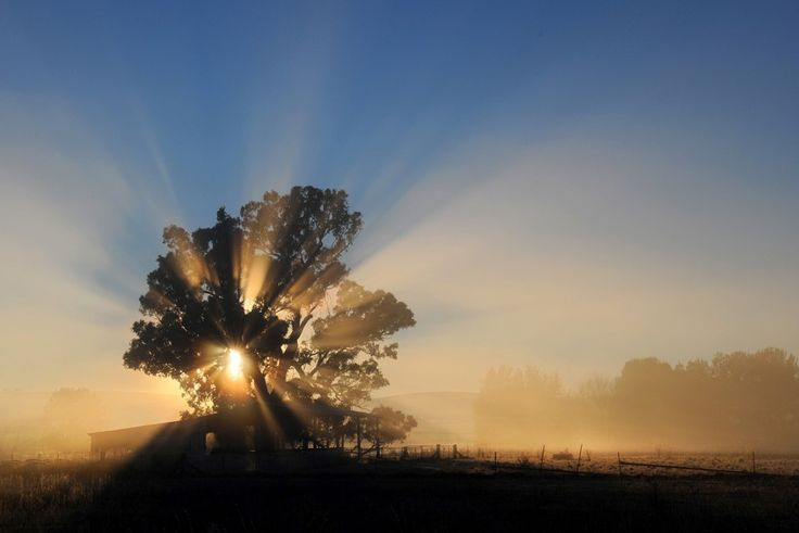 A photo of the sun rays through a beautiful tree. By Amber Hooper