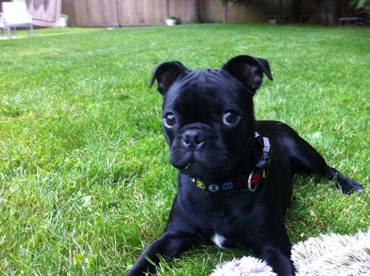 my puppy elmo, she is a boston terrier pug mix and crazy lol
