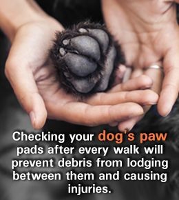 Tip to take care of your pet dog's paw pads