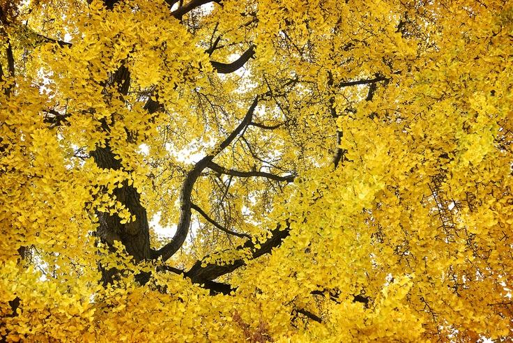 Seasonal Colors_05 by Pedro  Pinho, via 500px