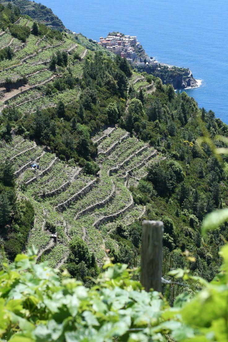 Cinque Terre - Italy #Liguria #Riviera #5Terre www.varaldocosmetica.it/en olive oil skincare .