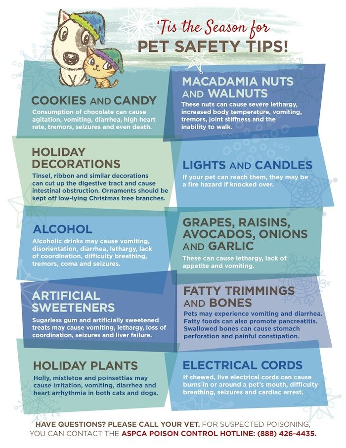 Common Holiday Hazards For Dogs