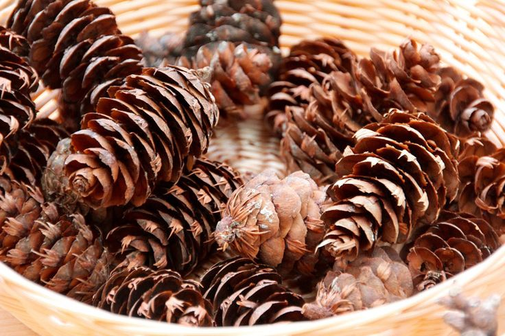 A bowl of Douglas Fir Cone is magnificently rustic.