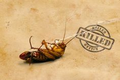 Roach remedies. My hubby is temporarily staying in an apartment with a roach problem...so i looked this up and there are several methods here. I especially like the bay leaves idea so the don't get into his clothes and bedding.  Natural Roach Remedy | Stretcher.com -