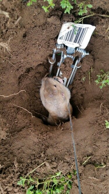 44 Best Rodent Control And Rodent Removal In San Antonio