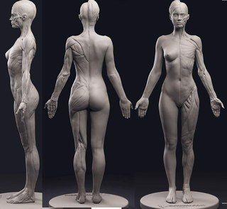 Учебник. Женское тело и его пропорции/позы