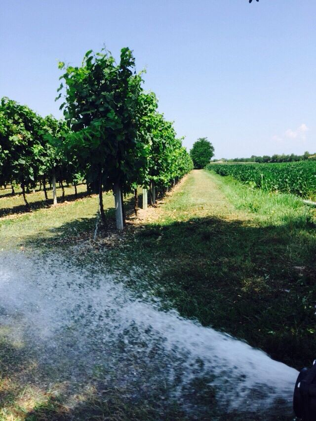 #19dibabo #forpartylovers #wine #prosecco #vineyard Www.19dibabo.com
