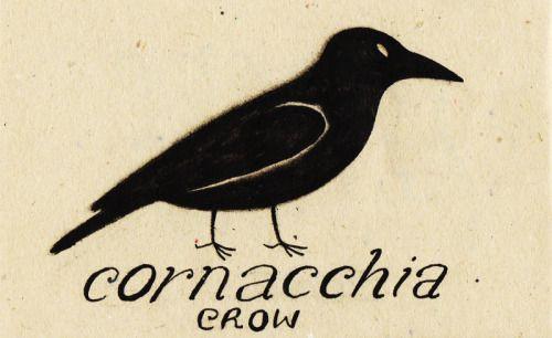 Learning Italian Language ~ Cornacchia (crow) IFHN