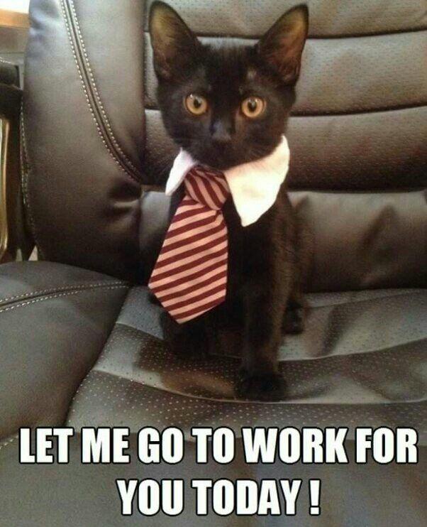 4fcd81c5f673f64777b466018462e3da lawyer kitty cats 149 best =^ ^= career cats =^ ^= images on pinterest career,Get Down Cat Meme