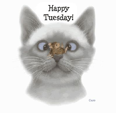 338 best **Happy Tuesday** images on Pinterest